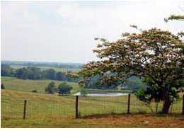 land for sale , MLS #442764, 2610 Lone Oak Farm Rd