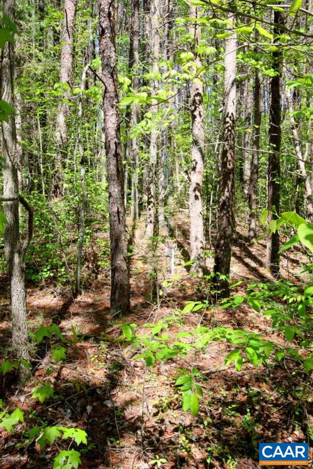 00 PLUM TREE RD, MINERAL, VA 23117