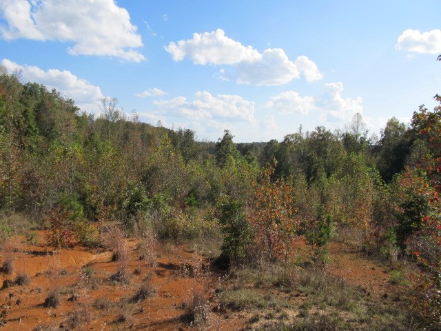 Dude Savannah, TN 38372 - MLS #: 9989539