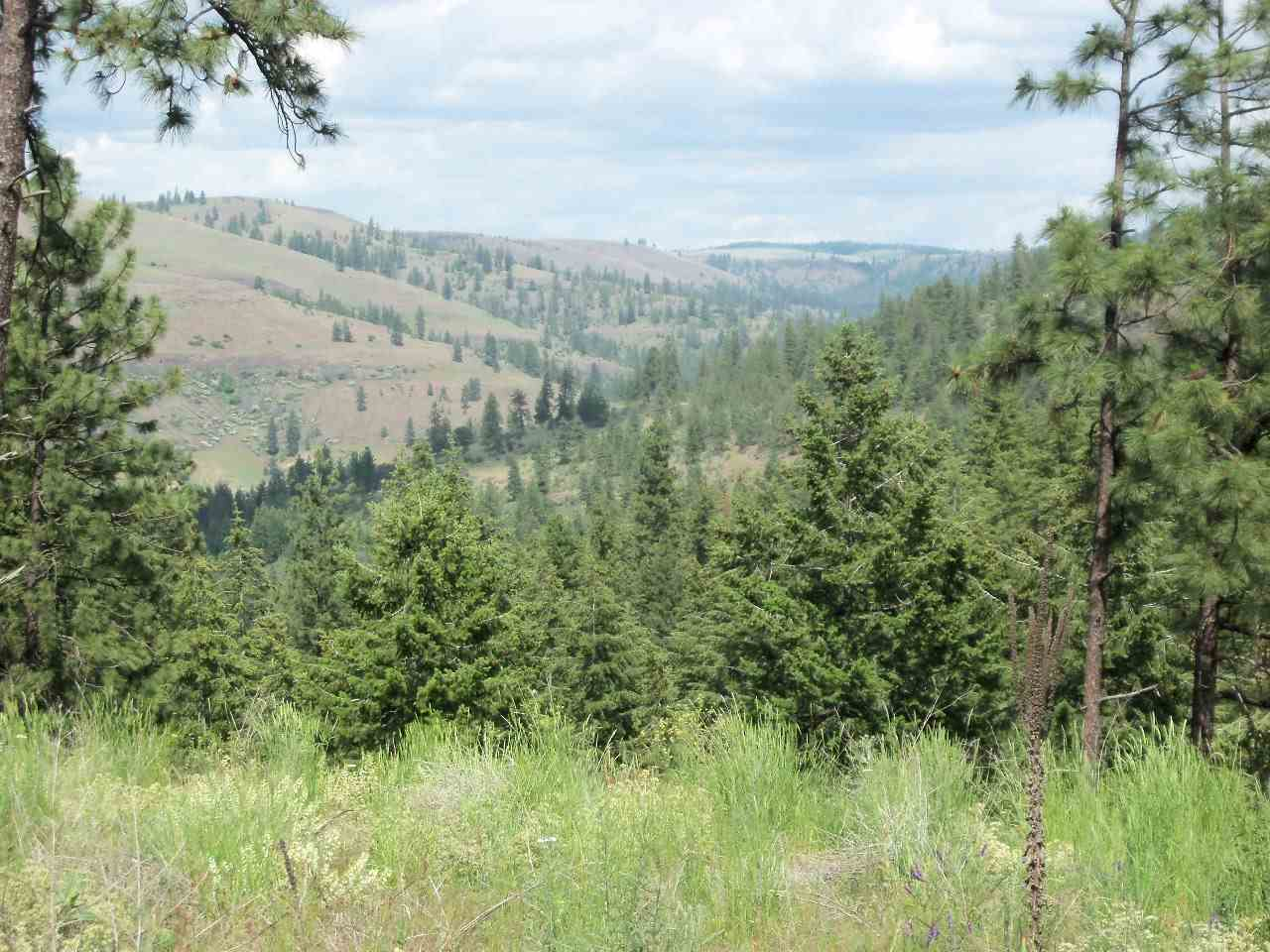 Land for Sale at XX Olsen Canyon Road XX Olsen Canyon Road Davenport, Washington 99122 United States