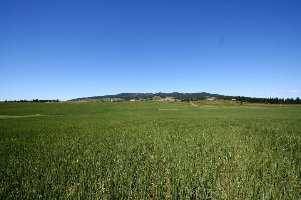 """Land for Sale at 11521 S Sands """"B"""" Road 11521 S Sands """"B"""" Road Valleyford, Washington 99036 United States"""