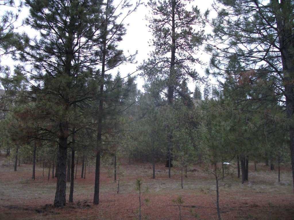 Land for Sale at 7566 Hwy 291 7566 Hwy 291 Ford, Washington 99013 United States