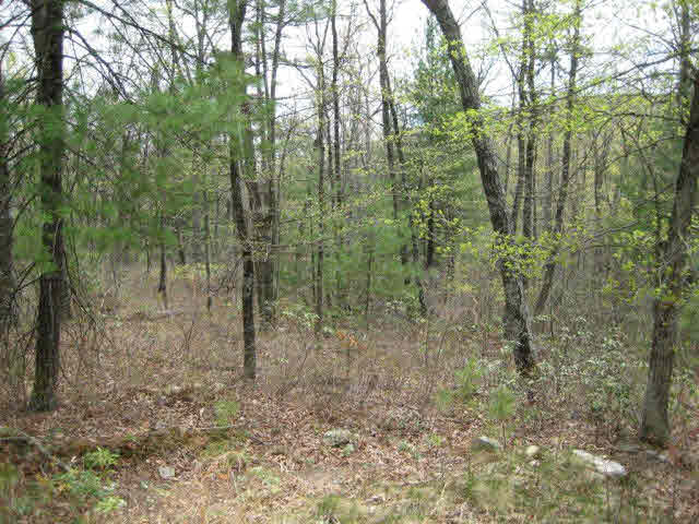 Lot 45 FETTERBUSH LN, HINTON, VA 22831