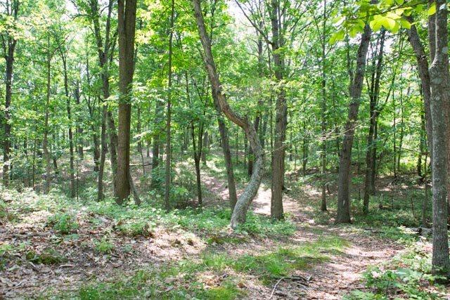 31 acres BLOOMER SPRINGS RD, MCGAHEYSVILLE, VA 22840