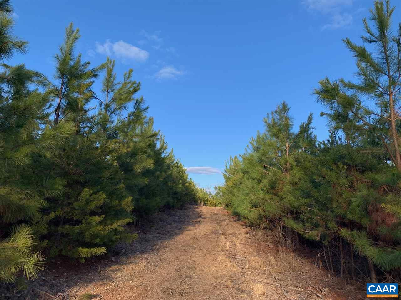 Prime opportunity to own a 115+/- acre pine plantation in Keswick area of Albemarle and Louisa Counties!  Parcel includes state road frontage in Albemarle County, interior road, planted pine plus several prime home sites.  Price to sell below current tax assessments. Here's info from the owner on pine plantation:They were planted February 2015 w/ release spray fall 2016 at 545 trees per acre density, by a professional tree service.  They were loblolly pine trees, specifically, CP trees.  CP are control pollinated, which are the highest grade of improved trees available from Virginia DoF.  Also, near some SMZ, we planted approximately 3,500 shortleaf pine for diversity. Great location minutes to Zion Crossroads and Pantops.